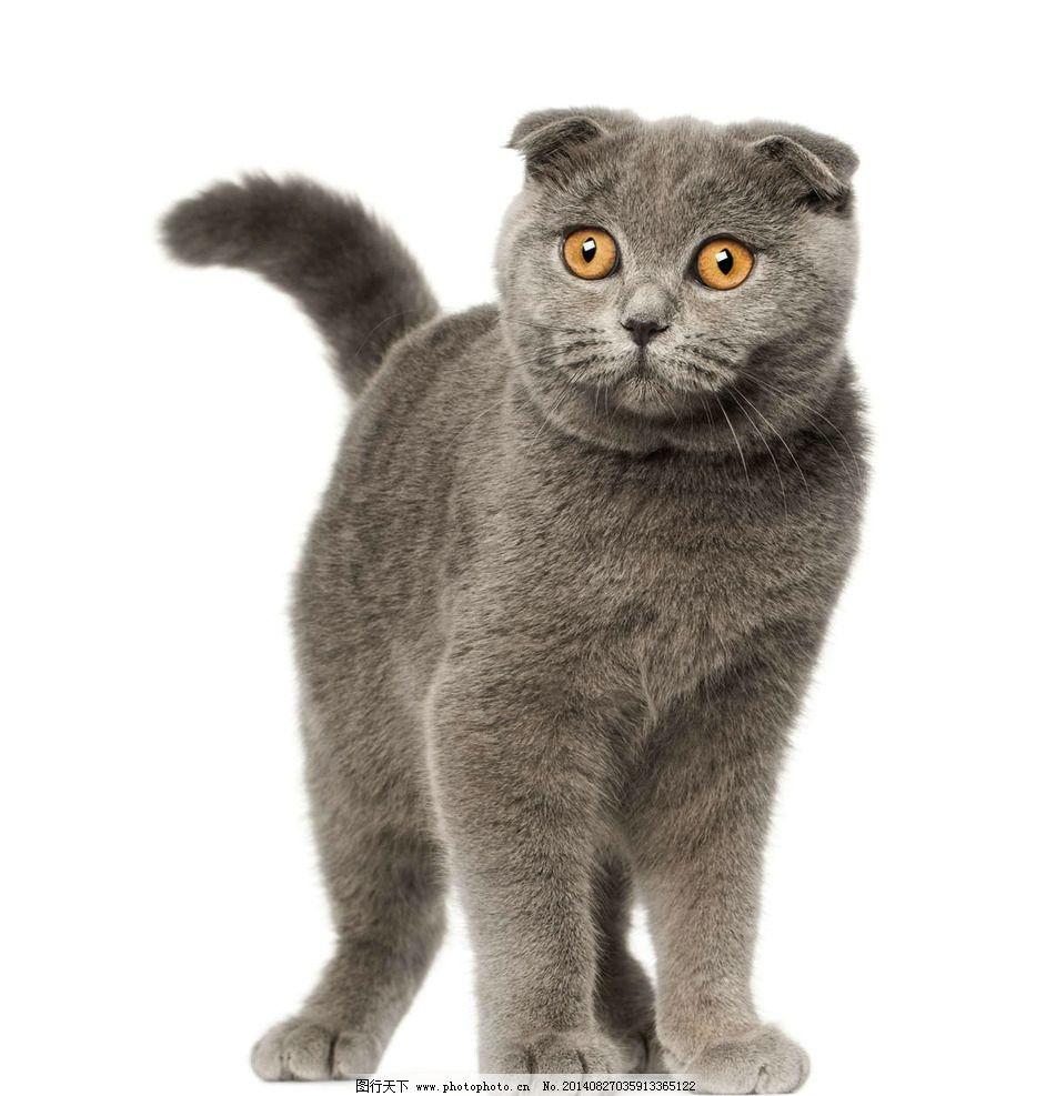 小猫 猫咪 cat 宠物 可爱动物 小猫咪 kitty 家禽家畜 生物世界 摄影
