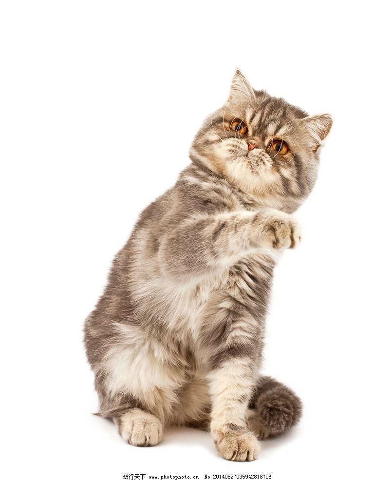 小猫 猫咪 宠物 可爱动物 小猫咪 摄影