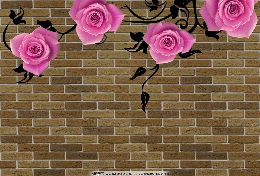 墙玫瑰花 墙 玫瑰花 玫瑰