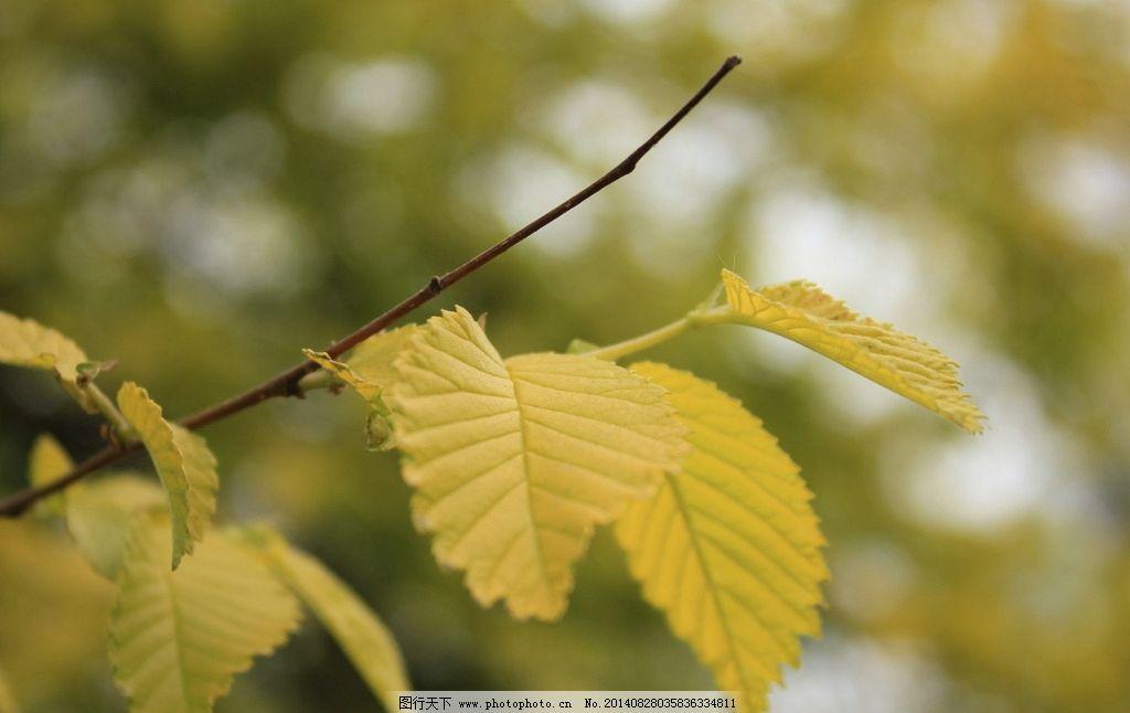 树叶 微距 摄影      绿色 树木树叶 生物世界 72dpi jpg