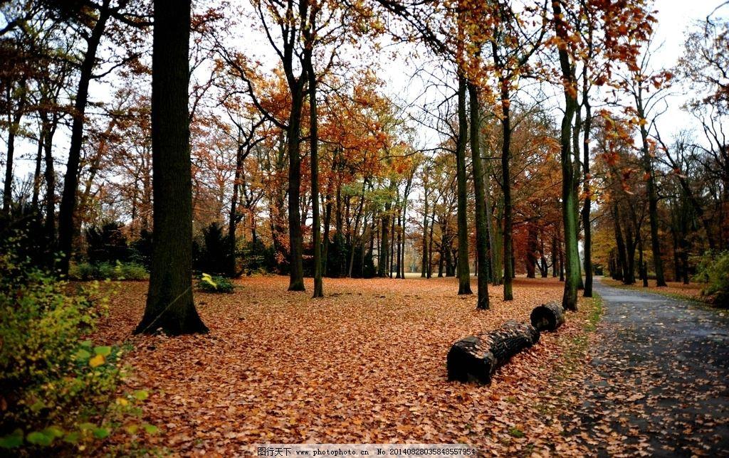 秋天 树林 落叶 高清 摄影