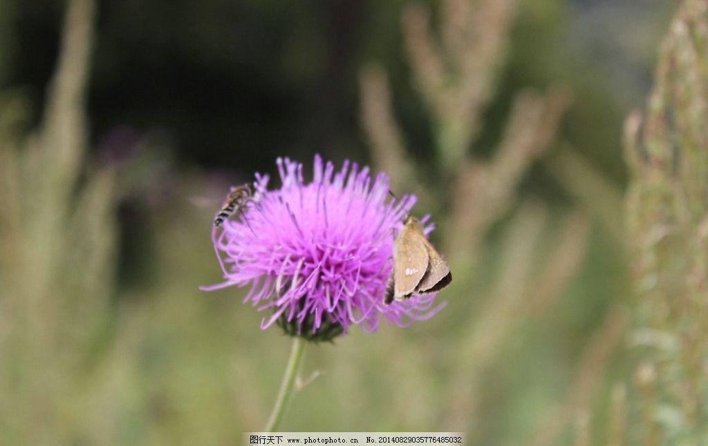 蒲公英 蝴蝶 春天 唯美 小清新 花草 生物世界 摄影 生物世界 花草 72