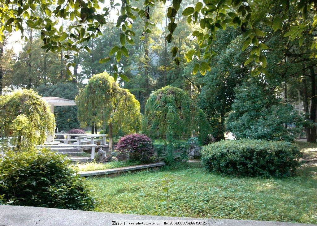 学校景观 绿色 环保 自然 公园 树木 环境设计 自然风景 自然景观