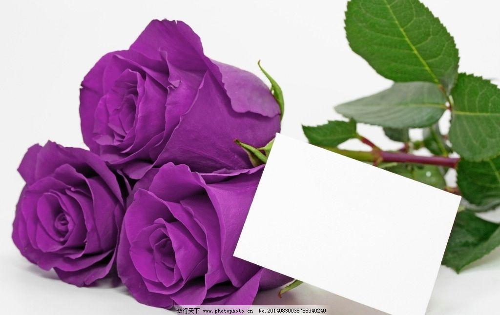 头像微信 风景 花朵 玫瑰