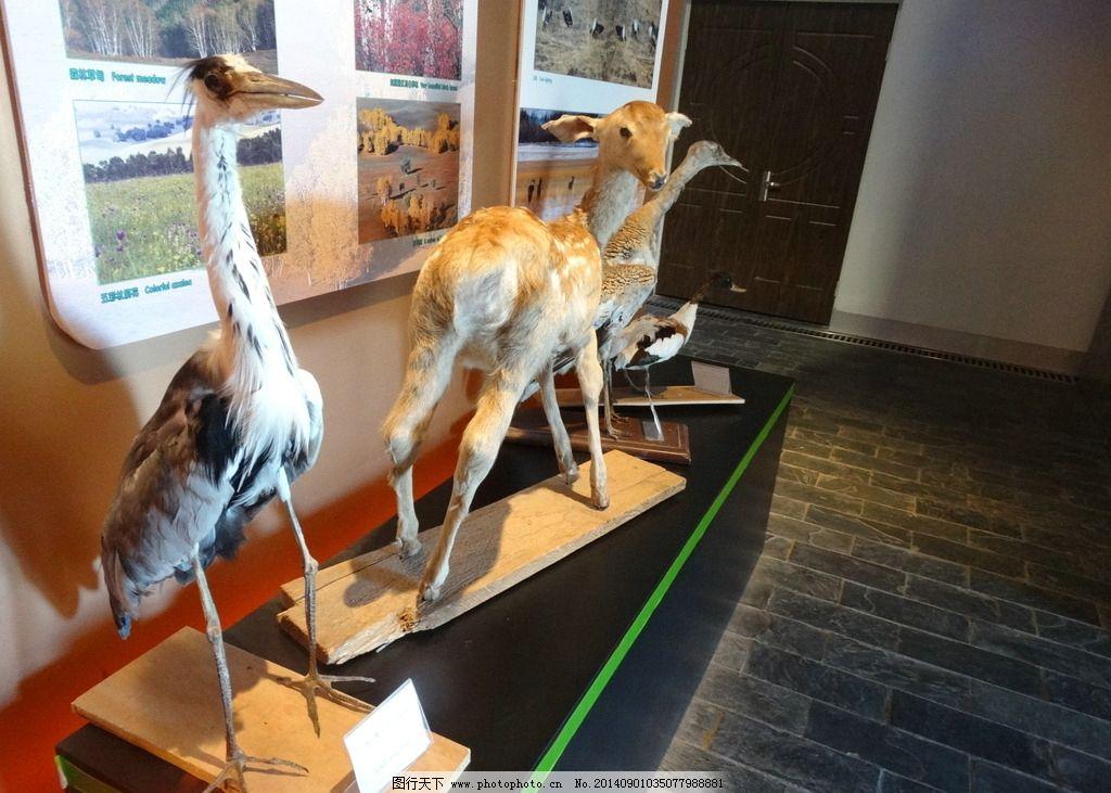 天鹅 鹿等动物标本图片
