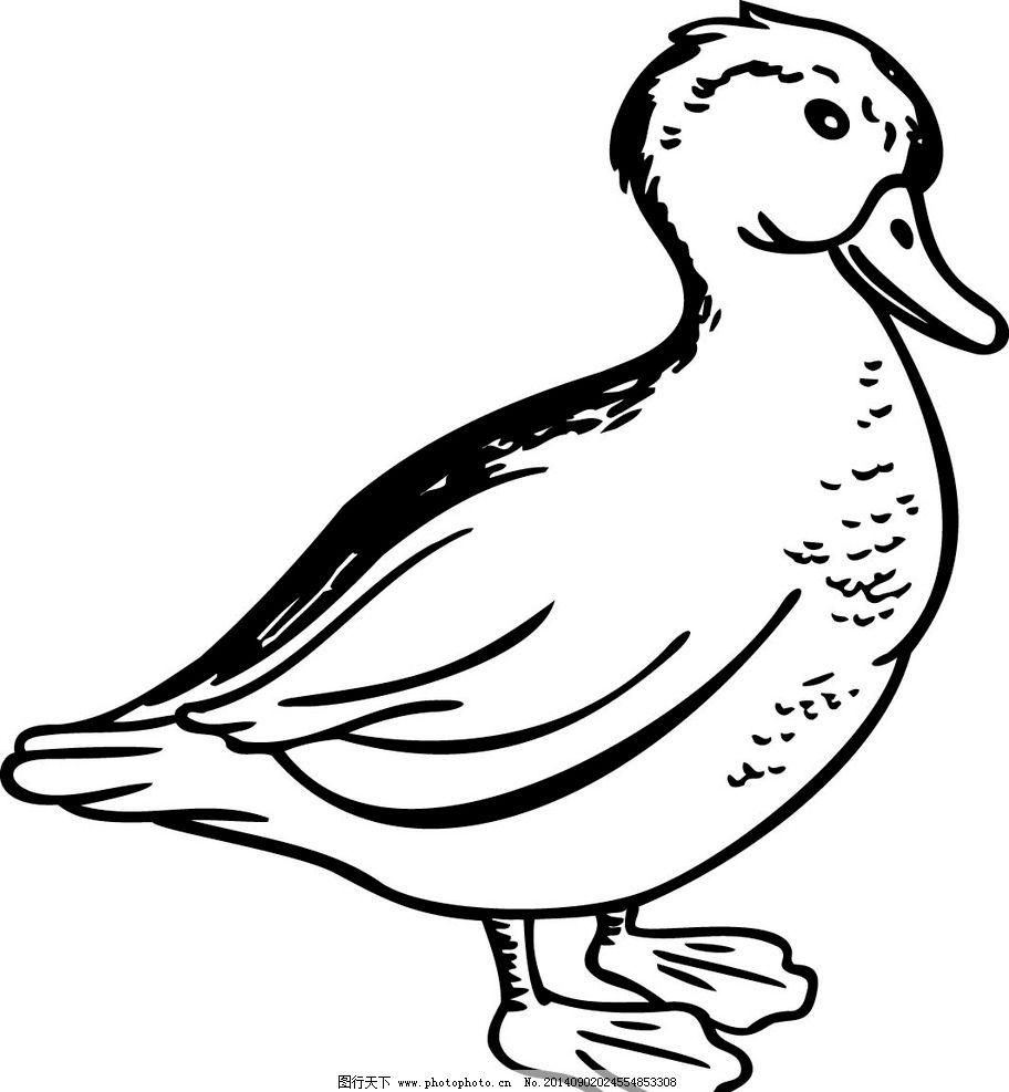 动物素材 鸭 鸭子 矢量图 线稿图片