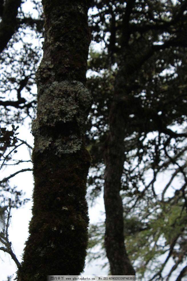 树木 树枝 天空 树叶 云南 树干 国内旅游 旅游摄影 云南 摄影 旅游
