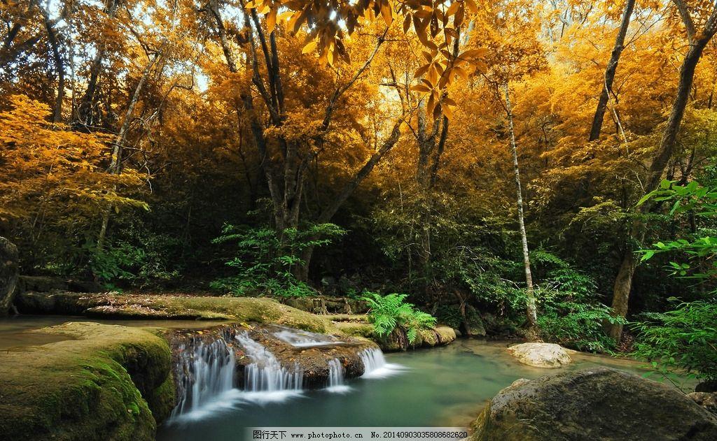 森林 树林 树叶 瀑布 落叶 绿叶 秋天 春天 夏天 背景 壁纸图片