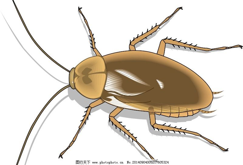 25昆虫免费下载 矢量边框花纹 矢量花纹素材 矢量图库 25昆虫 矢量