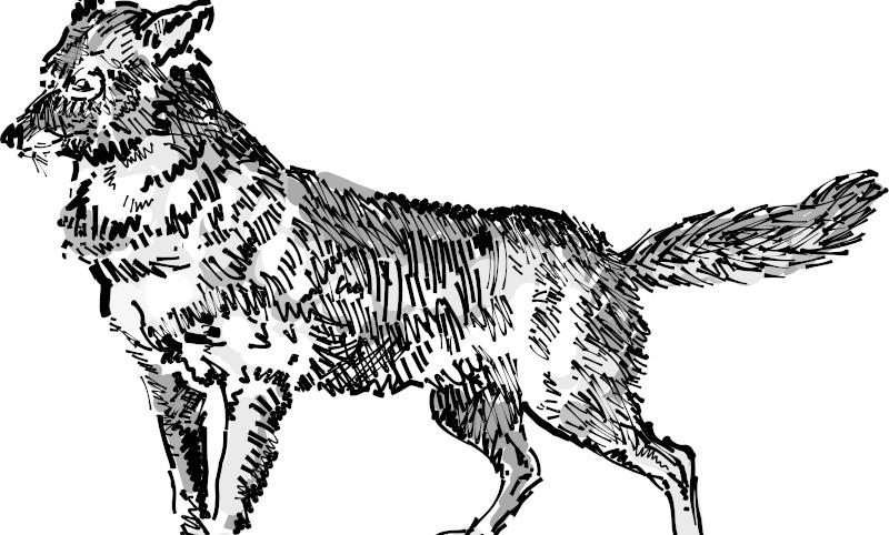灰色带花纹的狗