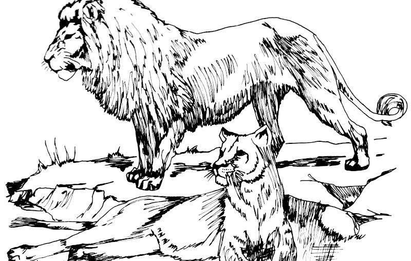 狮子欺负小动物的图片简笔画