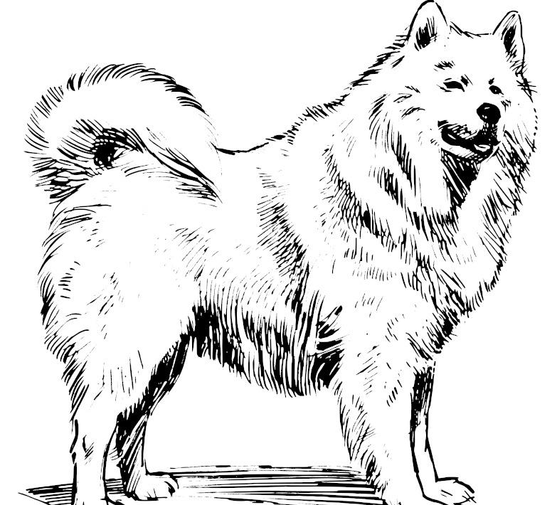 萨摩耶犬免费下载 矢量边框花纹