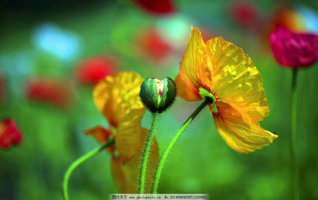 大自然 绿色大自然 花朵 自然风景 鲜花 风景 花草 生物世界 摄影