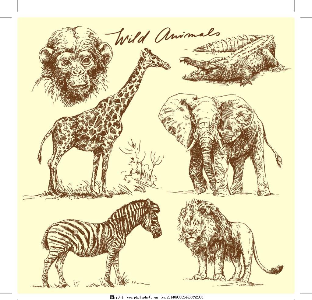 手绘动物 狮子 长颈鹿
