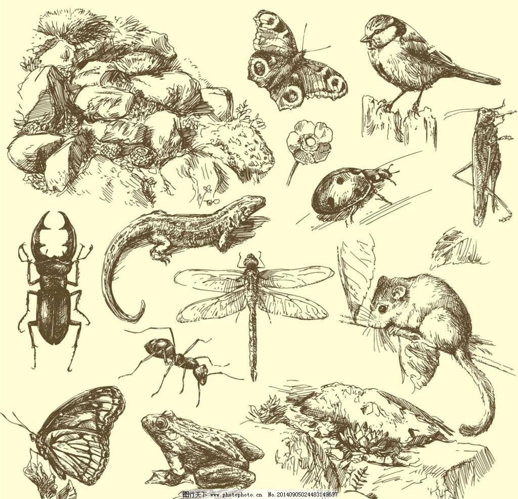 蝴蝶 手绘素描动物