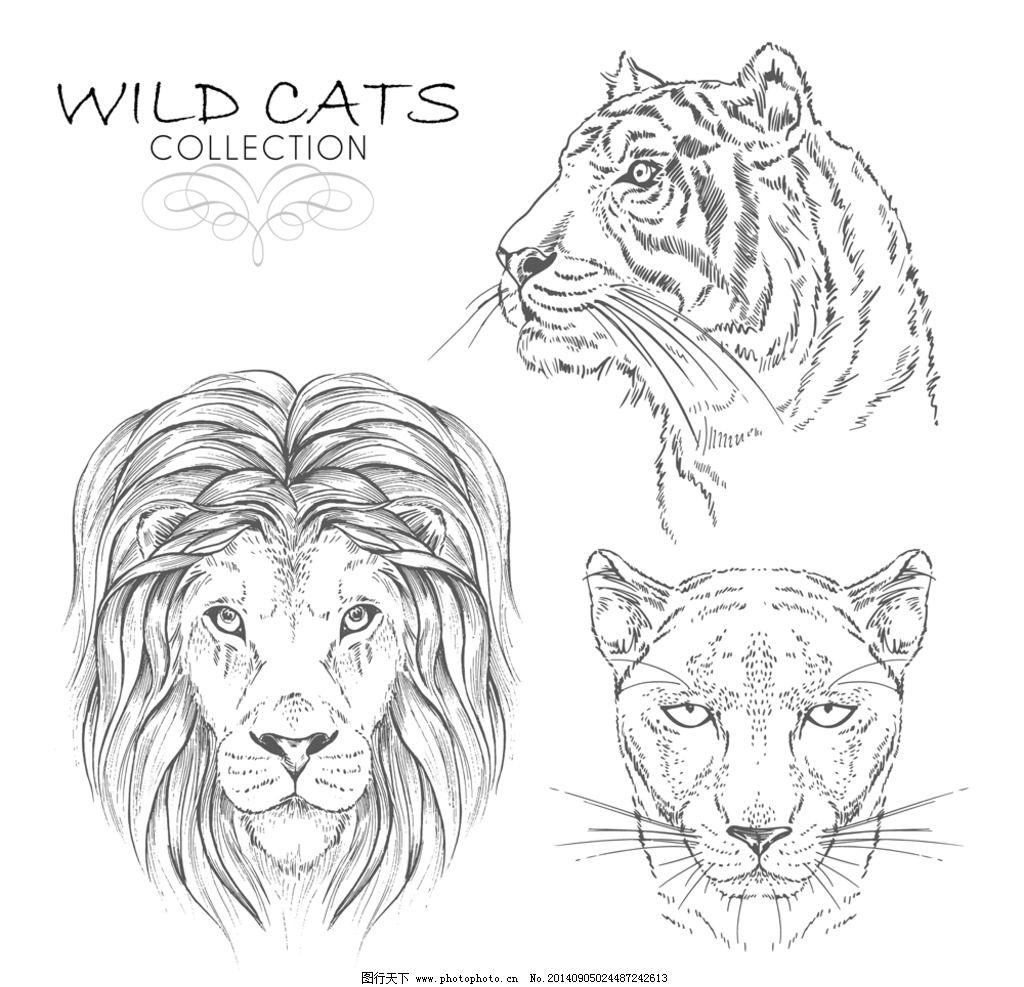野生动物 手绘素描动物
