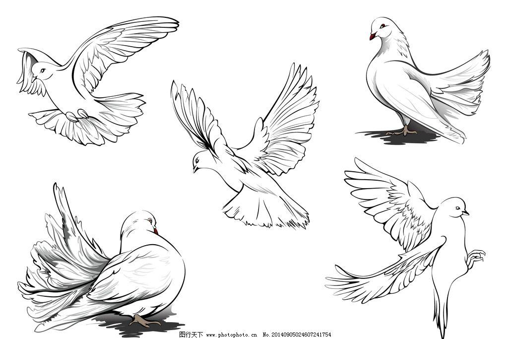 手绘白鸽 手绘动物 和平鸽 手绘素描动物 手绘 剪影 素描 复古 简笔画