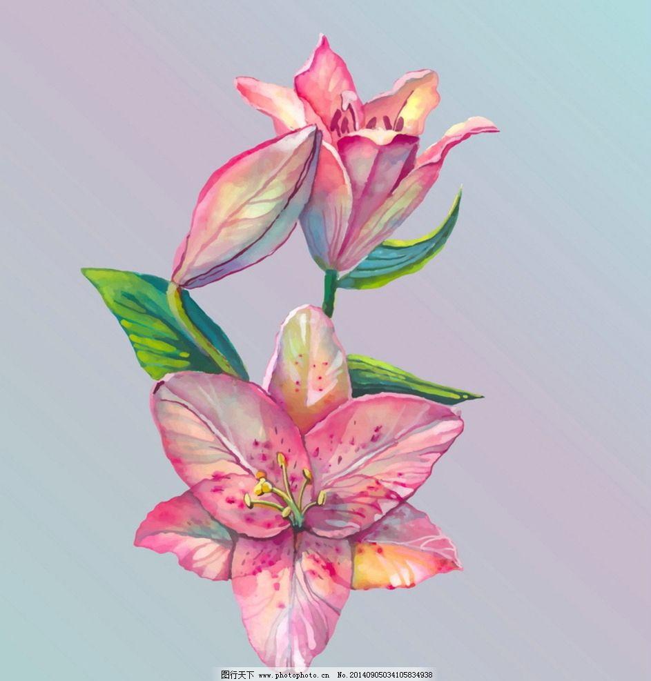 手绘百合花图片