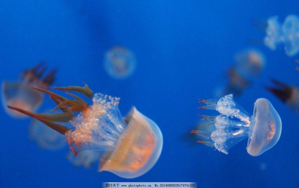 壁纸 动物 海底 海底世界 海洋馆 水族馆 鱼 鱼类 1024_646