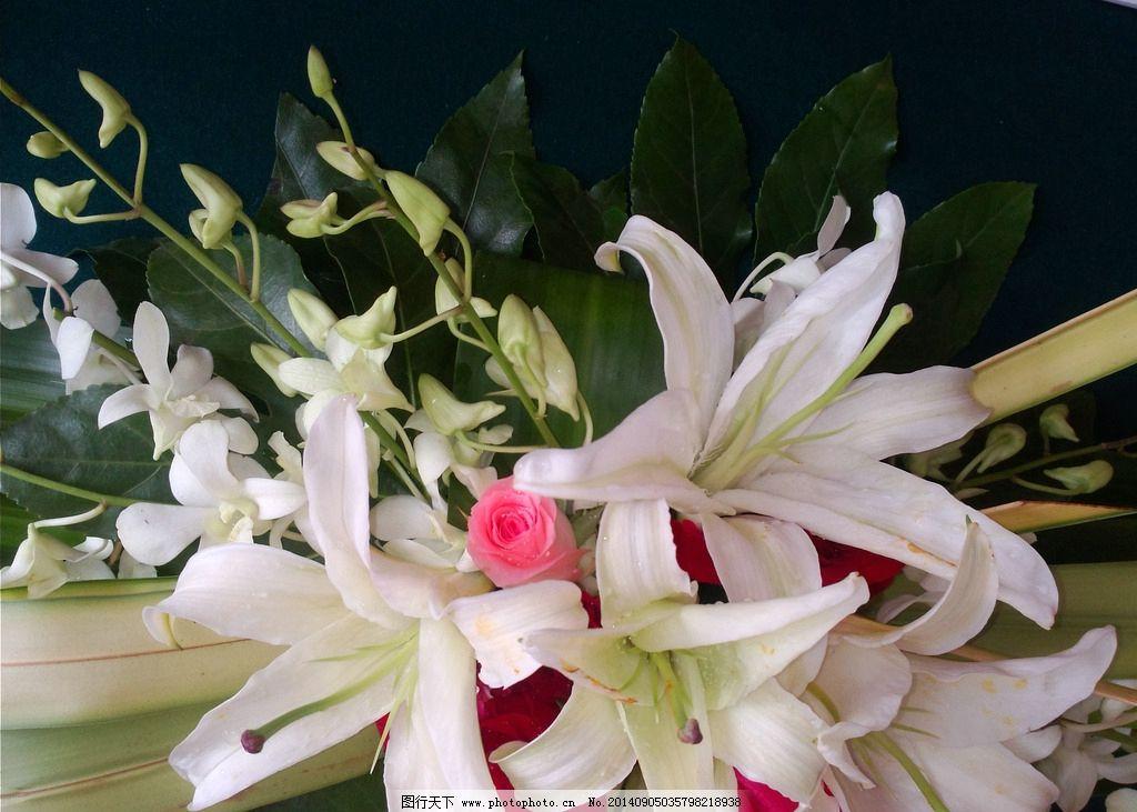 玫瑰百合花 玫瑰花 鲜花 白色百合 粉色玫瑰 鲜花束 摄影图 摄影图