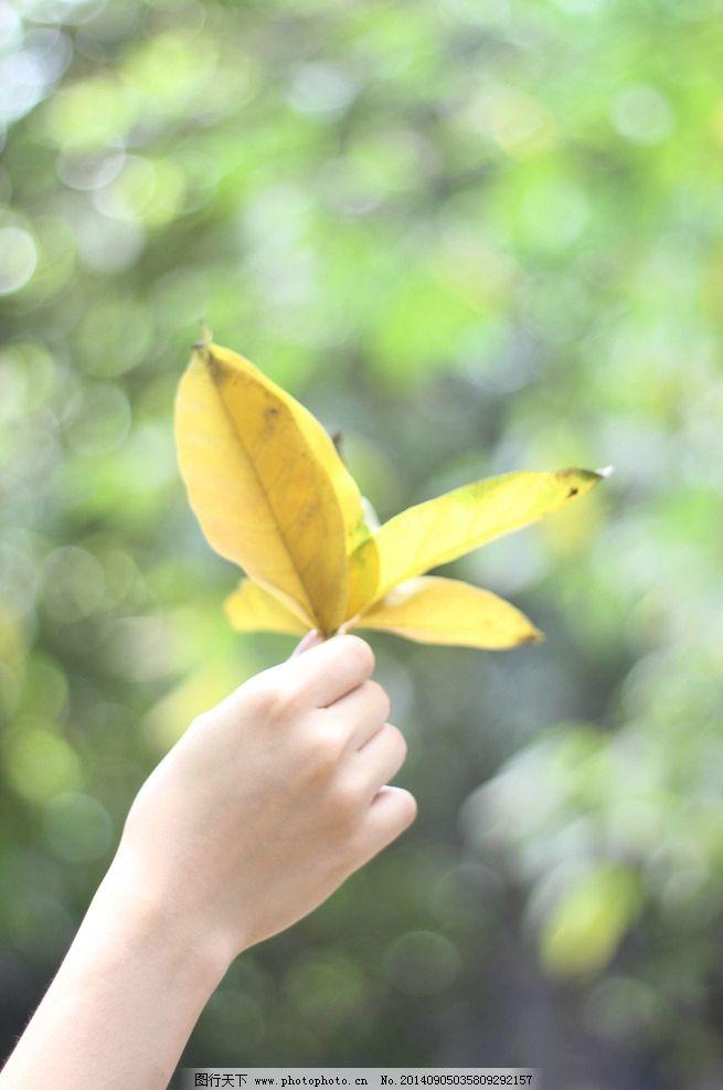 树叶 叶子 手 女人的手 小景深 树木树叶 生物世界 摄影 生物世界图片