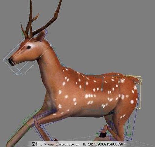 鹿动画模型免费下载 3d模型 动物 鹿动画模型 3d模型 动物 3d模型素材