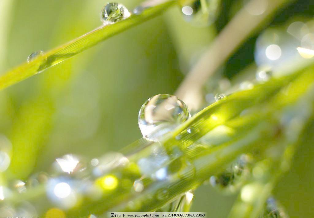 树叶 水滴 绿叶水滴 植物 植物叶子 田园风光 绿叶 树叶 叶子 水滴