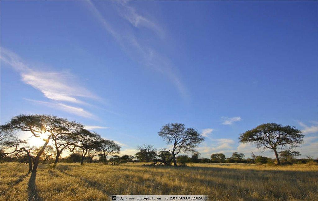 非洲大草原风光 大树 参天大树 非洲 非洲风光 非洲风景 非洲大草原