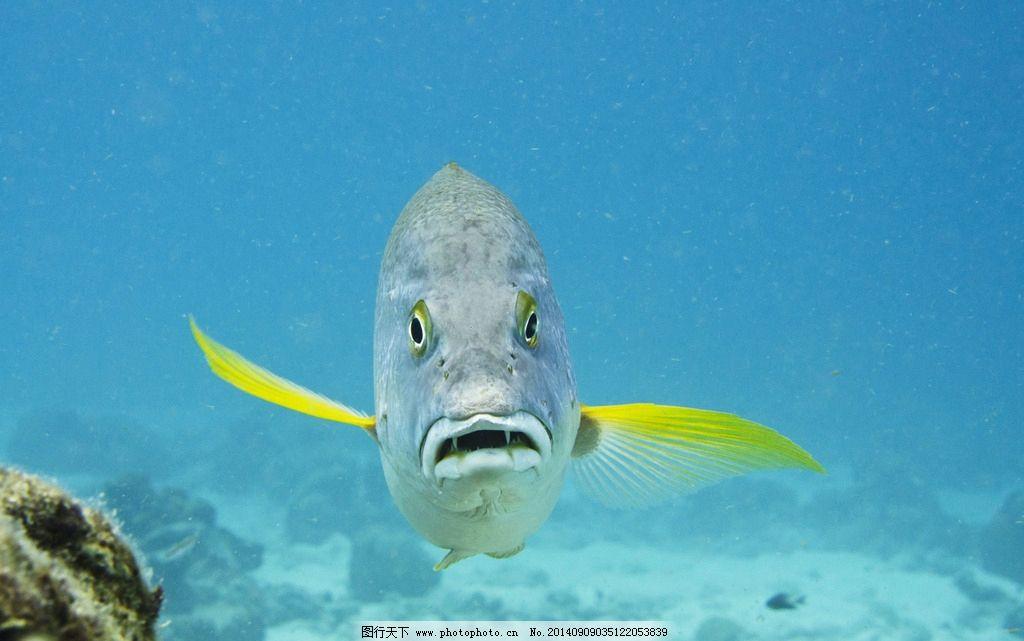 海洋生物 海洋 热带鱼图片