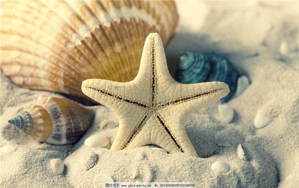 海星 贝壳 沙滩 沙子 海洋生物 海产 扇贝 海螺 生物世界 摄影 生物