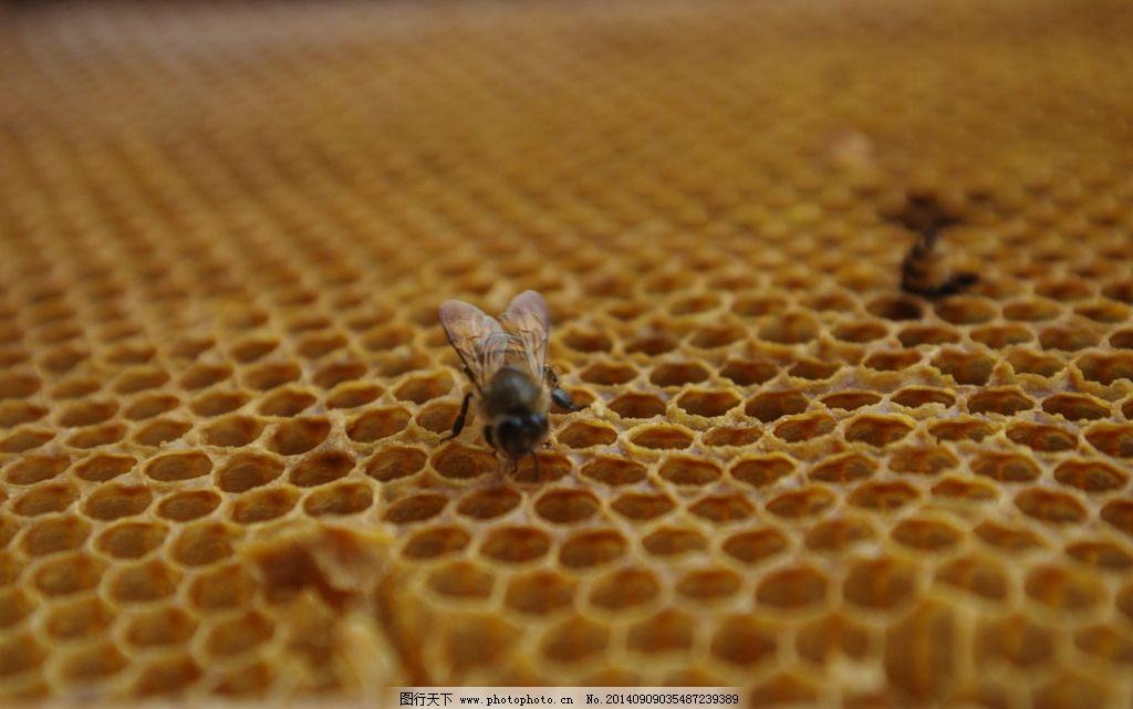 梦见蜜蜂窝_蜜蜂蜂窝图片