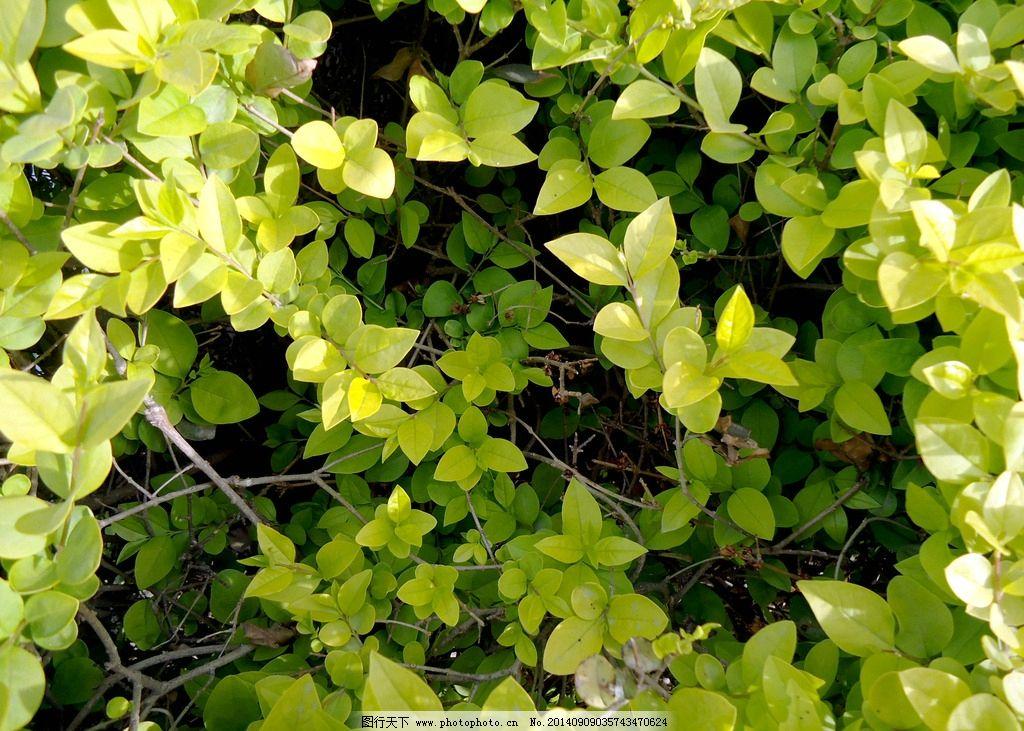 绿叶 黄色叶子 绿色背景 植物 绿化 装饰图片 阳光下的叶子 花草 生物