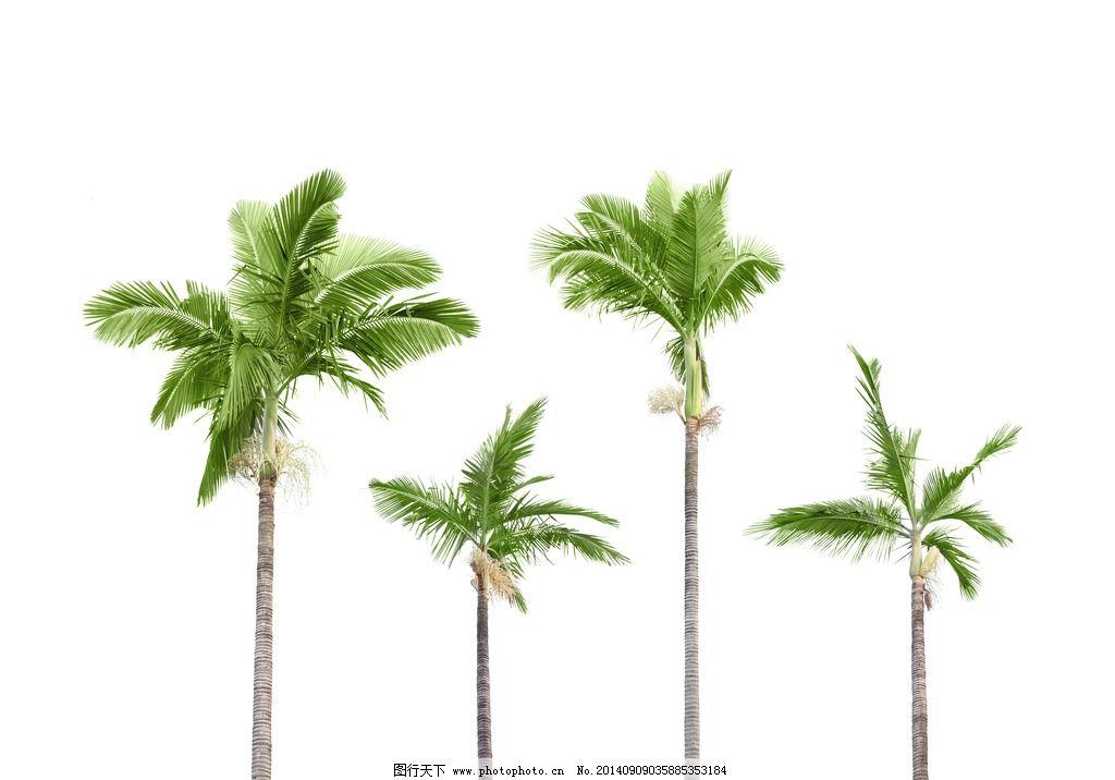 热带棕榈树图片 棕榈树 油棕树 树木 树叶 绿叶 叶子 植物 热带植物