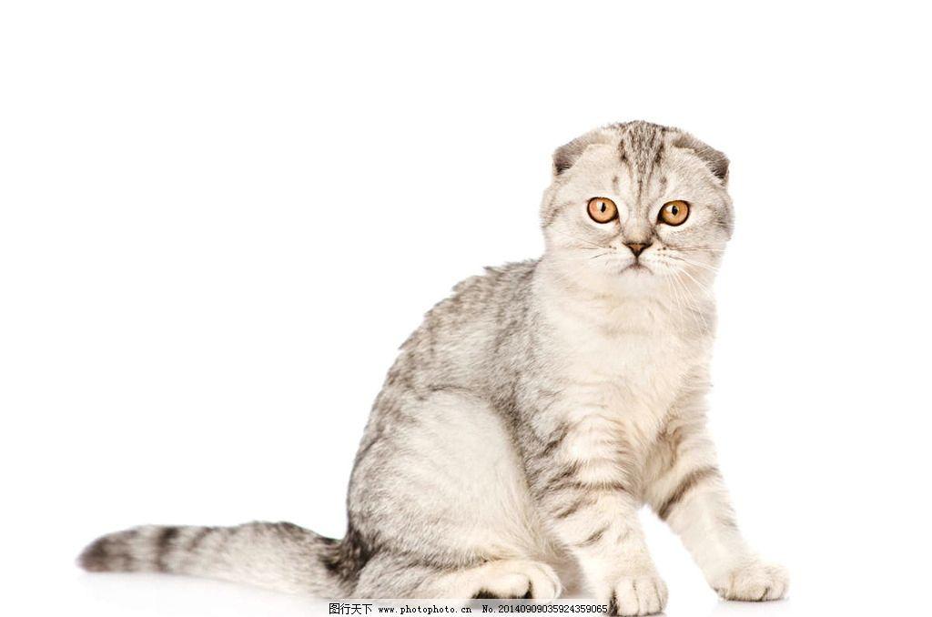 壁纸 动物 猫 猫咪 小猫 桌面 1024_678