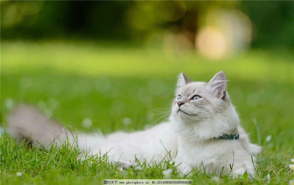 壁纸 动物 狗 狗狗 猫 猫咪 小猫 桌面 1024_644