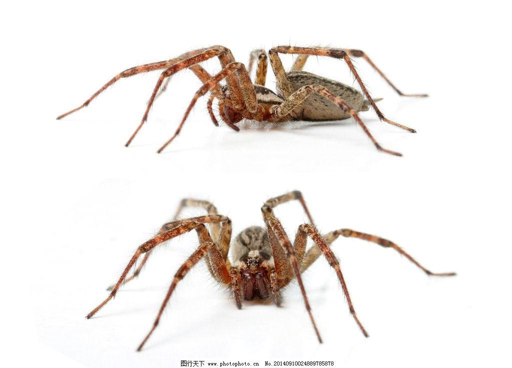 彩泥手工制作大全动物蜘蛛