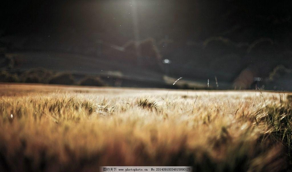 稻草 lomo 草地 黄色 阴天 暗黑 自然风景 自然景观  摄影 自然景观