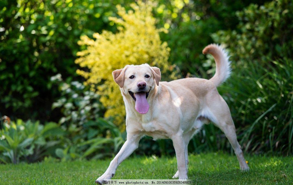 宠物狗 摄影 可爱狗狗 小狗 宠物动物摄影