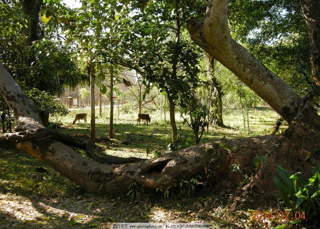 榕树 树干 植物 树 造型 马 动物 榕树造型 景观树 树木树叶 生物世界