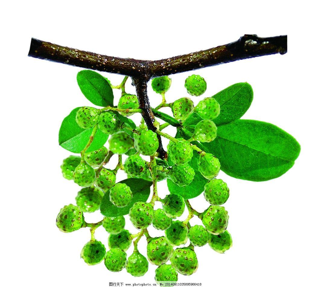 青花椒 佐料 调料 食材 摄影图片 树木树叶 生物世界 位图 摄影 生物