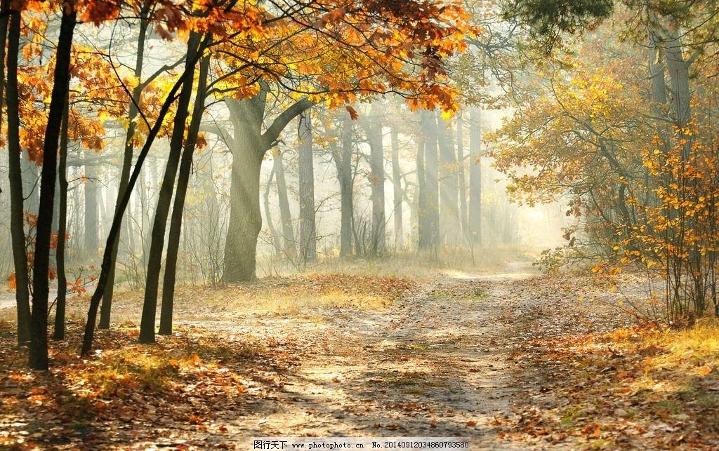 秋景图片_自然风景_自然景观_图行天下图库