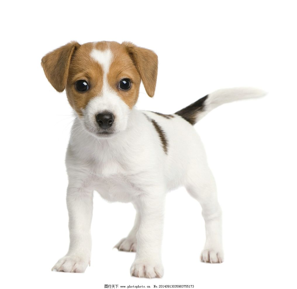 白底纸盘动物手工图片