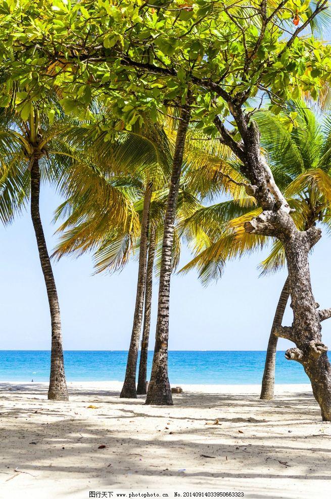 唯美椰子树图片