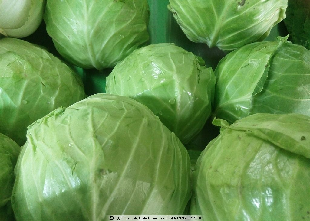 莲花白 蔬菜 绿色 圆形 包心菜 生物世界 摄影