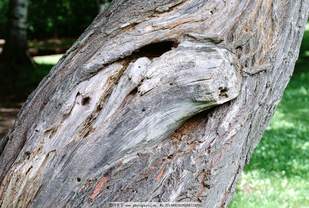 树皮纹理背景图片,树干 山间树皮 松树皮 层层树皮-图