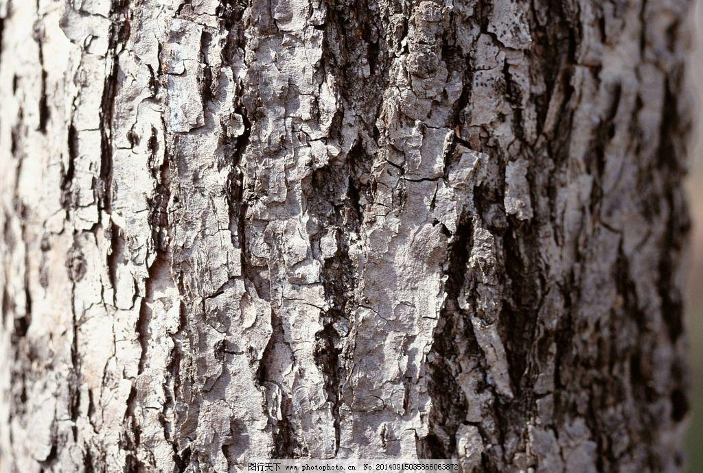 树皮纹理背景 树皮 树干 山间树皮 松树皮 层层树皮 老树皮 古树皮 树