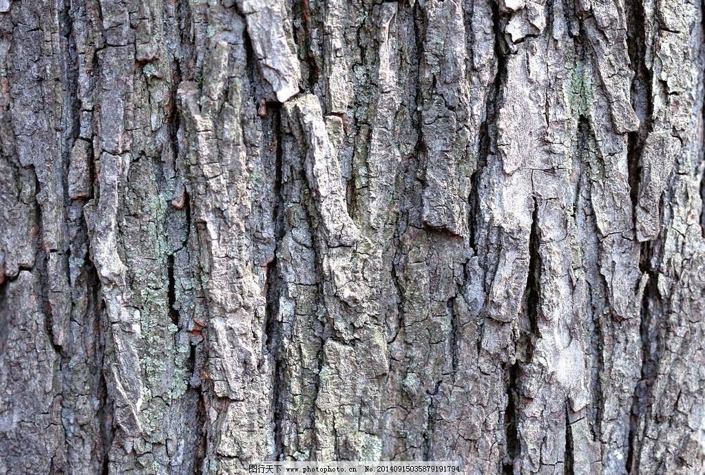 树皮纹理背景 树皮 树干 山间树皮 松树皮 层层树皮 老树皮 古树皮