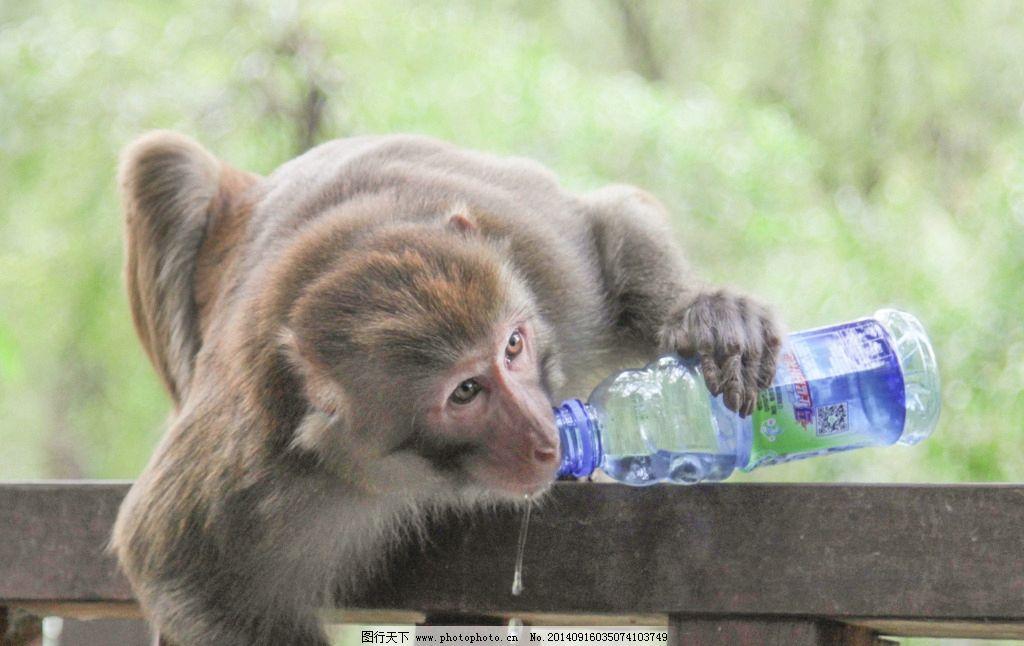 猴子 贵阳风光 黔灵山 黔灵山的猴子 小猴 人与动物 摄影