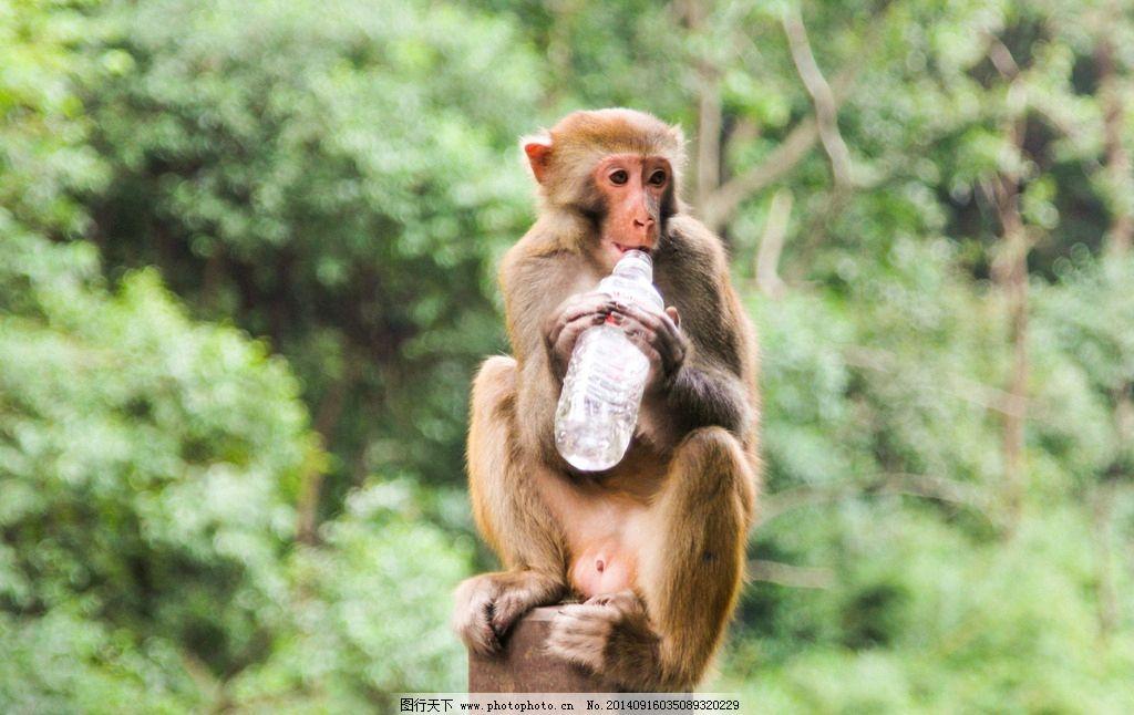猴子为什么跟人�y.b9`�_猴子 贵阳风光 黔灵山 黔灵山的猴子 小猴 人与动物 野生动物 生物