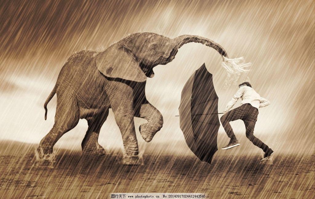 大象中有多少种动物